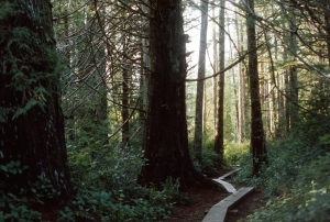 A trail through the forest leads from road's end to the beach.